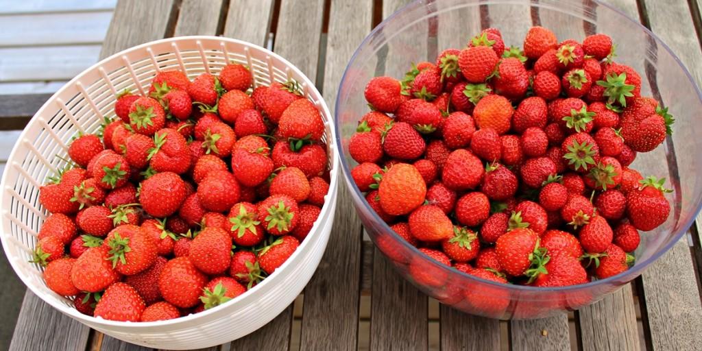 Jordbærrabarbersaft, jordbær, juli 2013